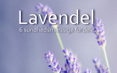 Lavendel – beroligende aromaterapi